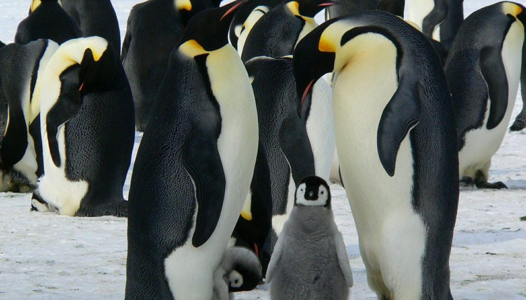 What Animals Do Live in the Antarctic?
